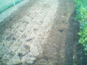 畑を耕しました・・・